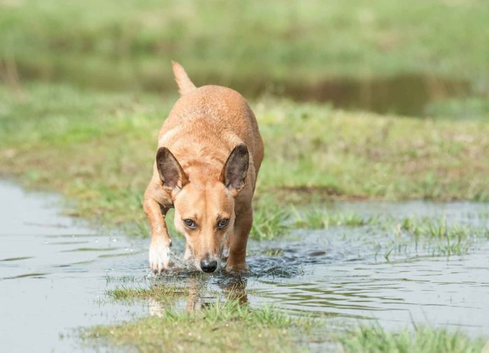 Juegos con #Perro: Olfateo