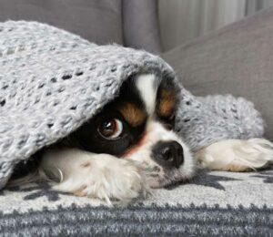 Coronavirus y mascotas. Combatir la ansiedad