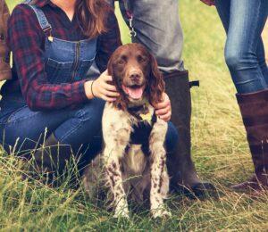 Alargar y mejorar la vida de nuestra mascota
