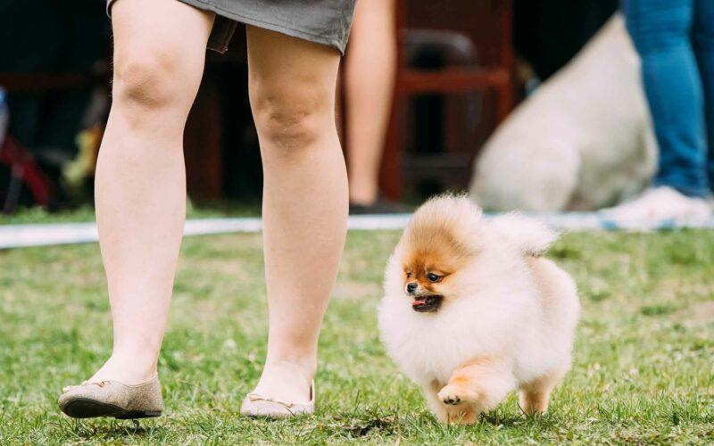 Alimentación de #Perros de Raza pequeña