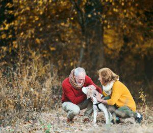 Cushing canino. ¿Qué es y cómo tratarlo?