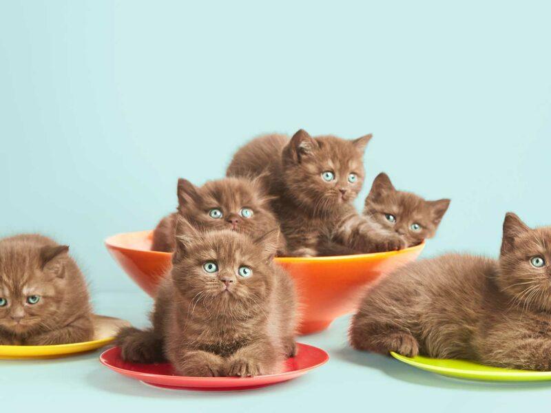 ¿Cómo elegir un buen pienso para #Gatitos?