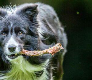 ¿Es bueno dar huesos a los #Perros?