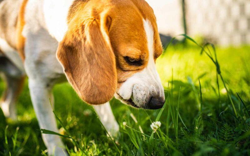 ¿Por qué tu #perro come hierba?