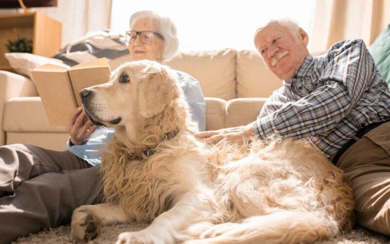 Alimentación para #Perros mayores