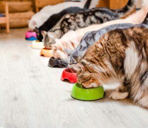 Consejos para que tu #Gato coma bien