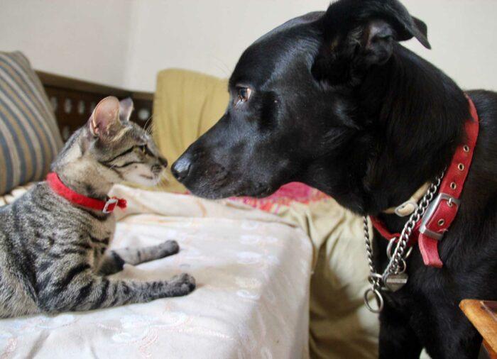 Diferencias entre #Perros y #Gatos en Alimentación