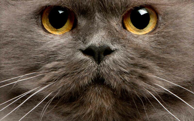 Bigotes del #Gato. ¿Para qué sirven?