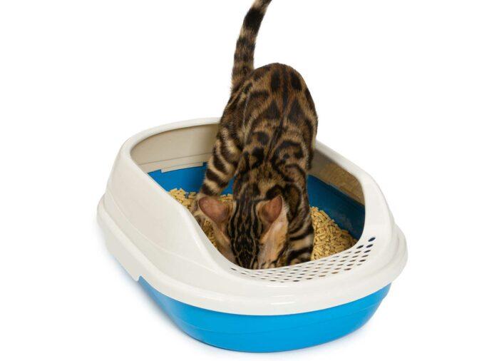 Mi #Gato tiene diarrea. ¿Qué hago?