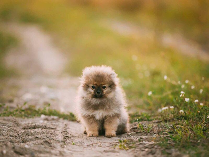 Enseñar a un #Cachorro a quedarse solo