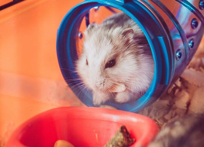 ¿Cómo limpiar la jaula de tu hámster?