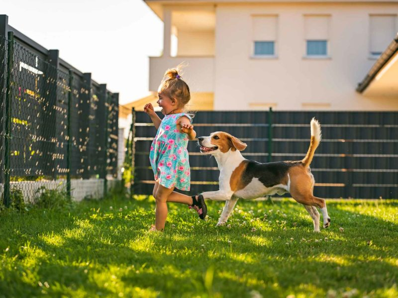 Perros y Niños ¡Mejor perro con niños!