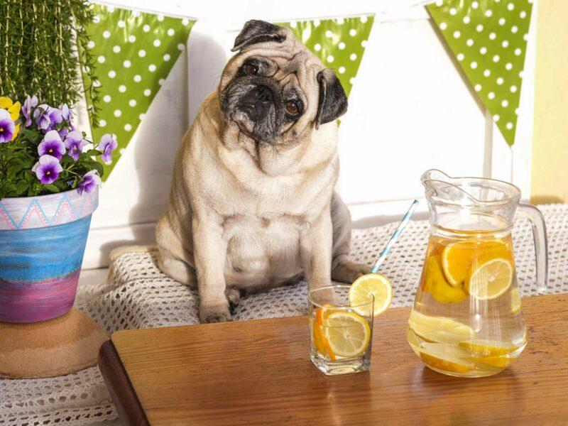 20 Alimentos que tu #Perro NO debe comer