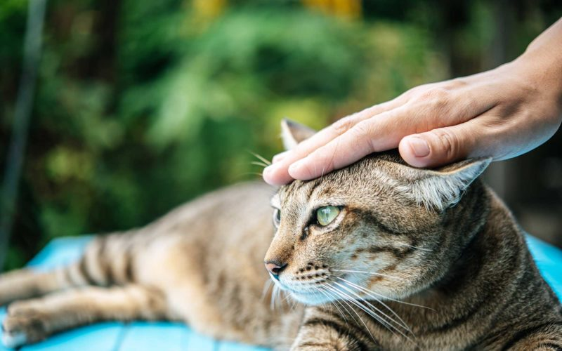 ¿Por qué mi #gato me frota?