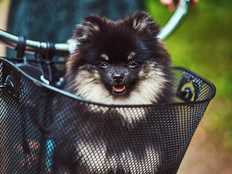 Mi perro tiene miedo a las #Bicicletas ¡Ayuda!