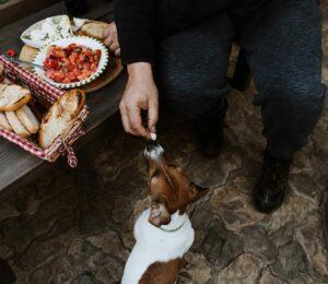 ¿Mi perro puede comer pan?